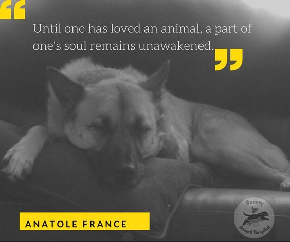 Harvey Animal Hospital - Veterinary Clinic in Grosse Pointe - Until one has loved an animal, a part of one's soul remains unawakened - Anatole France