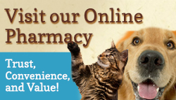 Harvey Animal Hospital's Trusted Online Pharmacy, Shop Online, Pet meds