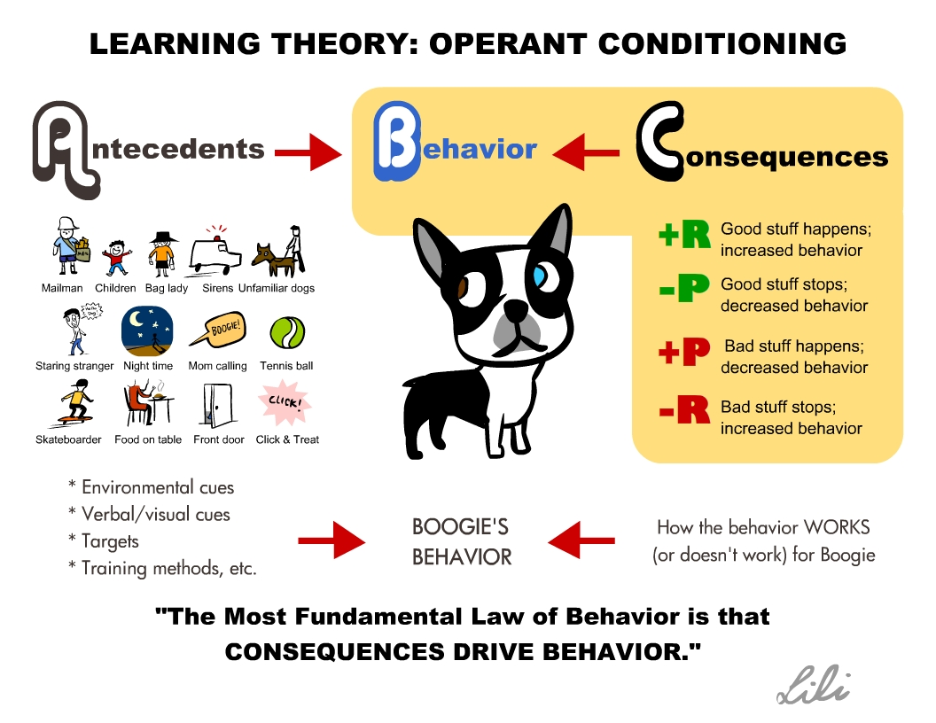 Dog training, counter conditioning, behavior modification