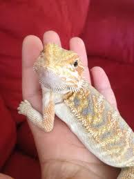 Harvey Animal Hospital - Exotic Vet in Grosse pointe, Exotic Animal Medicine, Birds, Rabbits, Guinea pig, reptile, ferret, hedgehog, bearded dragon