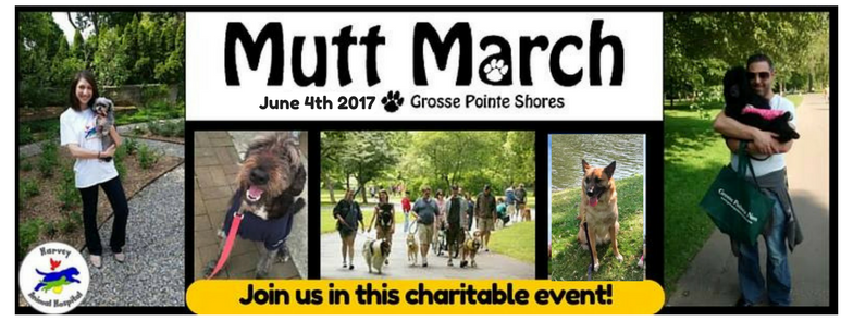 Michigan Humane Society Mutt March Grosse Pointe Shores mi, Harvey Animal Hospital Sponsor